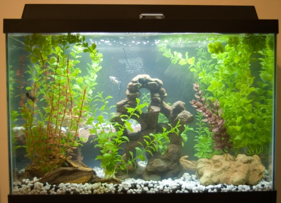 Feeding your aquarium or fish tank fish