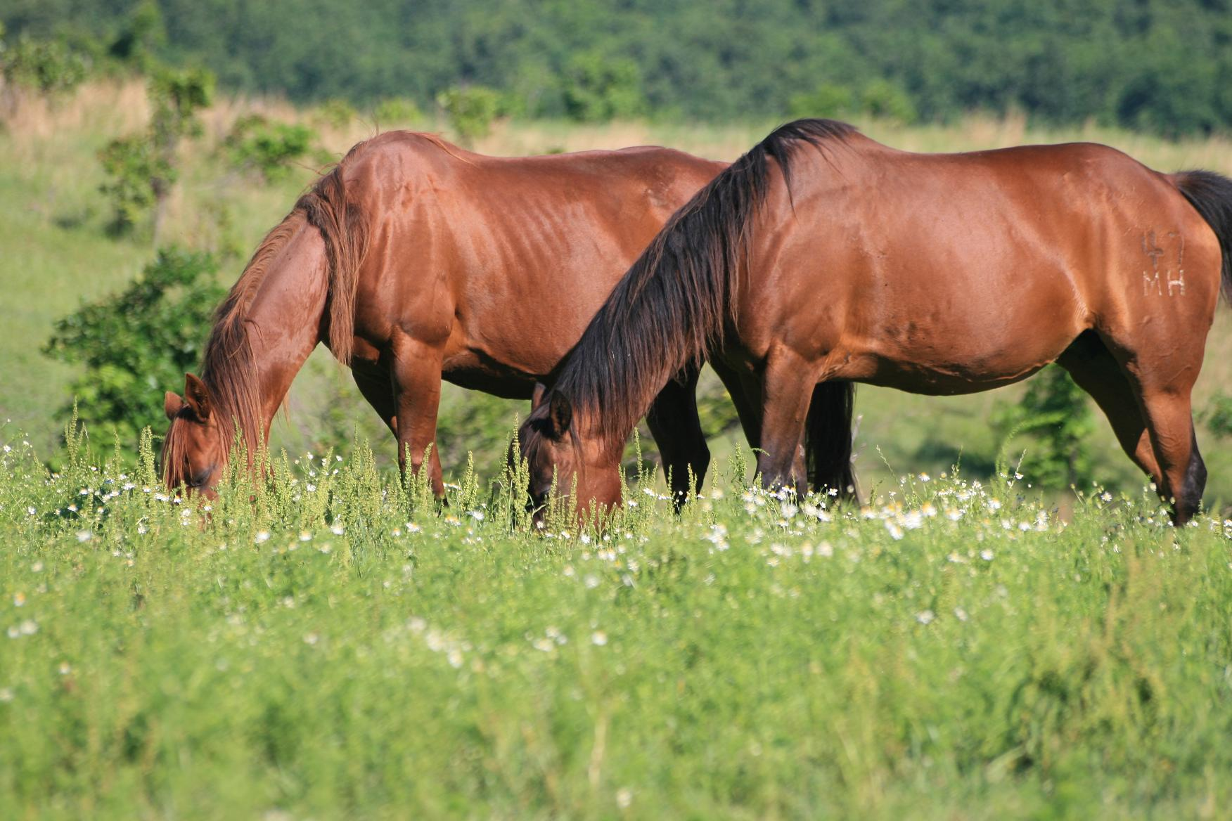 Growing Food For Livestock DIY Fodder Systems