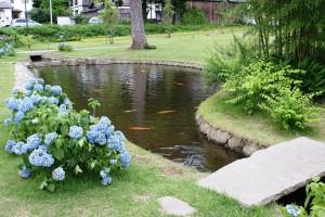 鯉のいる池