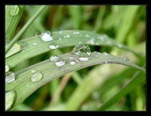 grass_rain_drops_329091_h