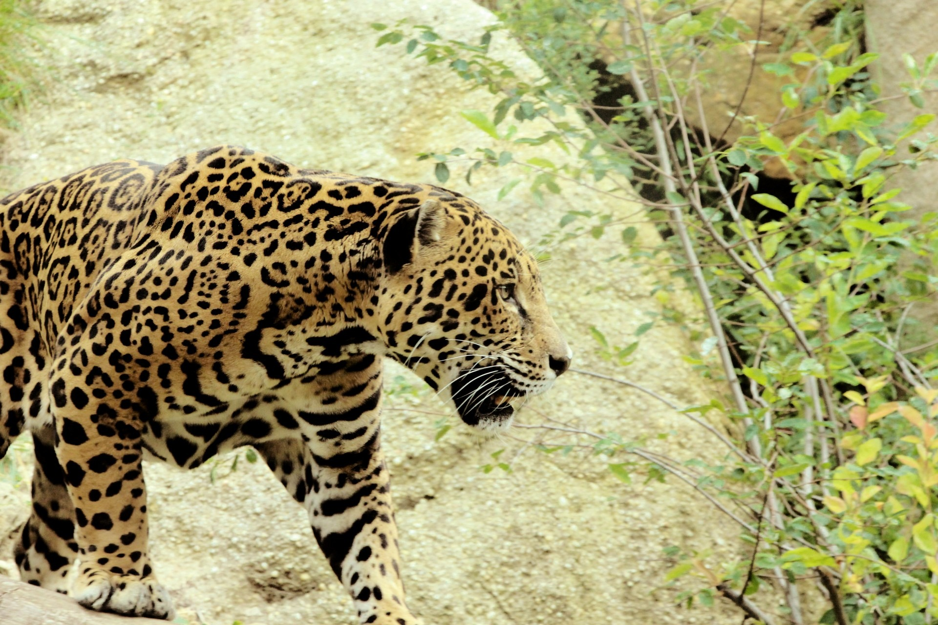 Protecting Livestock Against Carnivorous Predators