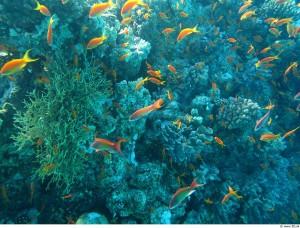ocean-life-215133_1280