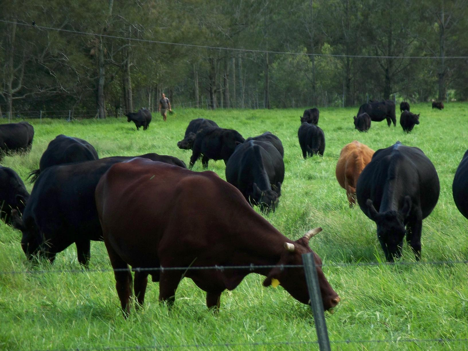 Maximize Nutrition for Your Livestock During Summer