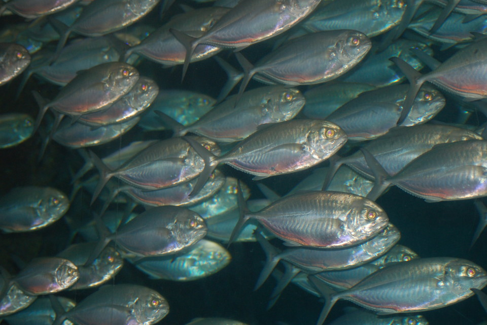 Intensive fish farming Book 1988 WorldCatorg