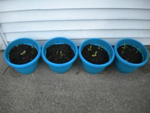 plants-268622_1280
