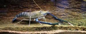 shrimp header2