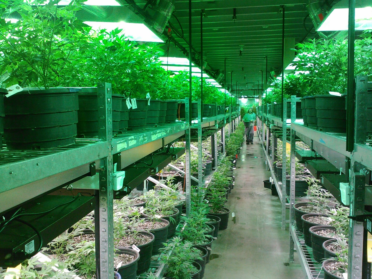 Hemp Business – Environmentally Sustainable & Profitable