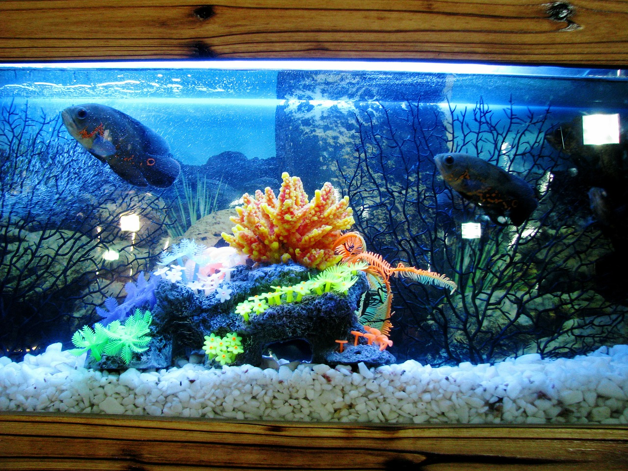 Start an Indoor Fish Farming Business from Home