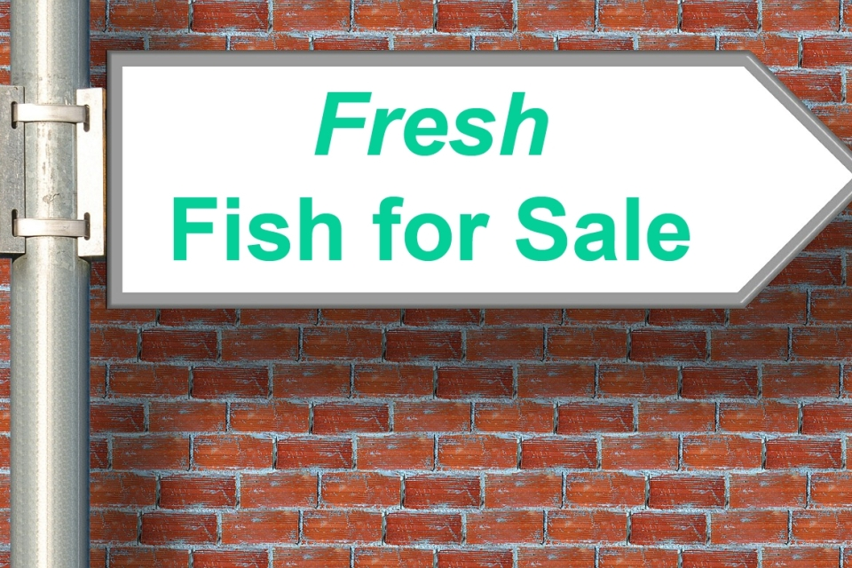 5 things to consider before starting a fish farming for How to start a fish farm