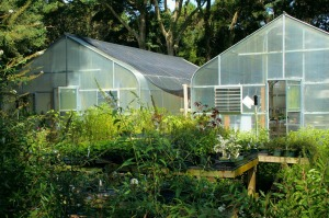 greenhouse-60830_1280