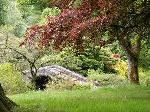 garden-473686_1280