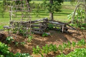 garden-662552_1280