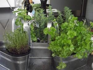herbs-167725_1280