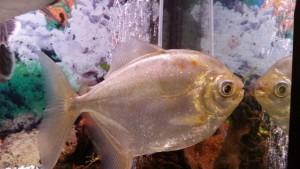 fish-684020_1280