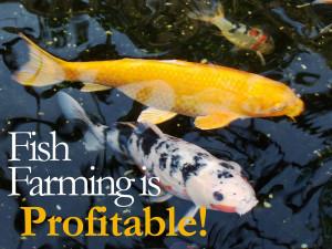 ProfitableFFarmingBlog