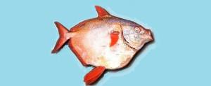Moonfish_600
