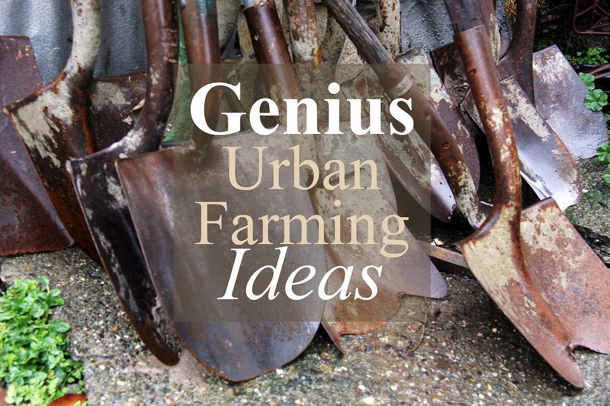 Urban Farming Technology – Grow Your Own Healthy Food