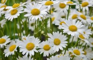 flower-821223_1280