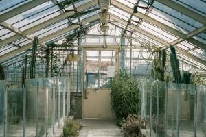 glasshouse-734705_1280