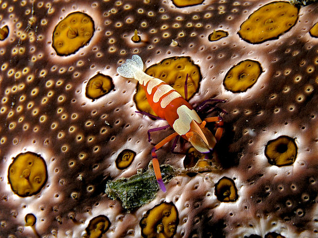 How to Control Microsporidian Parasites in Shrimp Farms