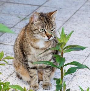 cat-779273_1280