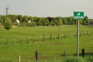 meadow-795267_1280