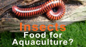 InsectsAquaBlog