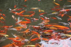 fish-714281_1280