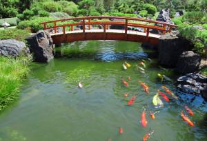 japanese-garden-koi-1385312-1279x873