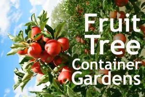 FruitGardenBlog