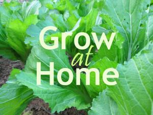 GrowHomeBlog