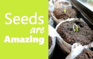 SeedsBlog