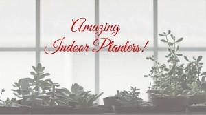 Amazing Indoor Planters