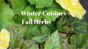 fall herbs