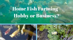Home Fish Farming