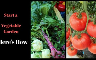 Love Vegetables? Here is How to Start a Vegetable Garden