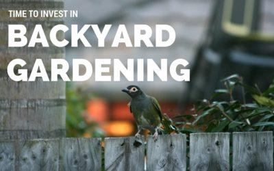 Time to Invest In Backyard Gardening