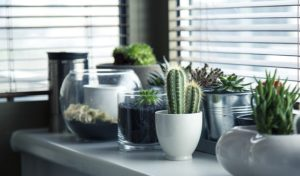 Growing Your Own Food Indoors