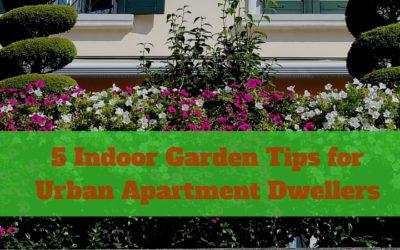 5 Indoor Garden Tips for Urban Apartment Dwellers