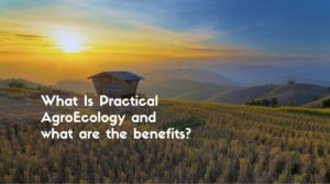 What Is Practical AgroEcology and what are the benefits-