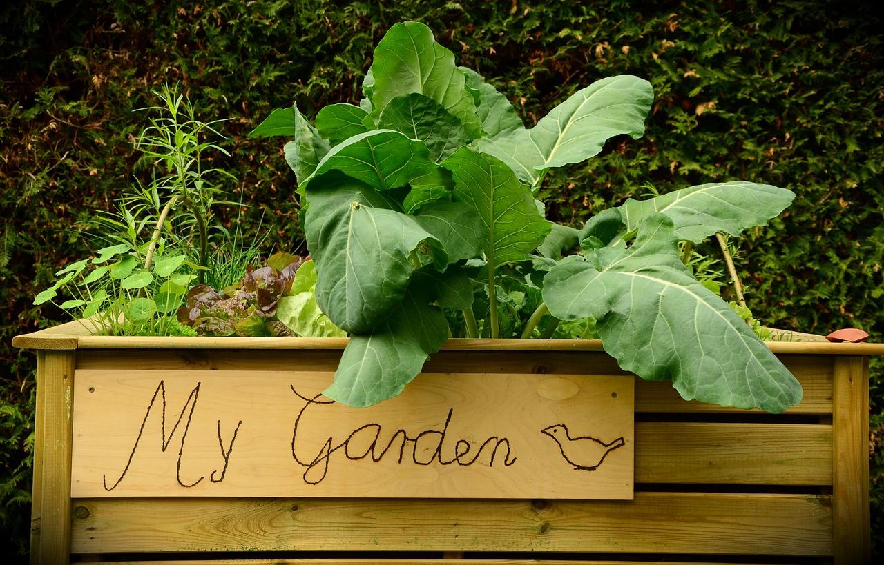 garden-1427541_1280
