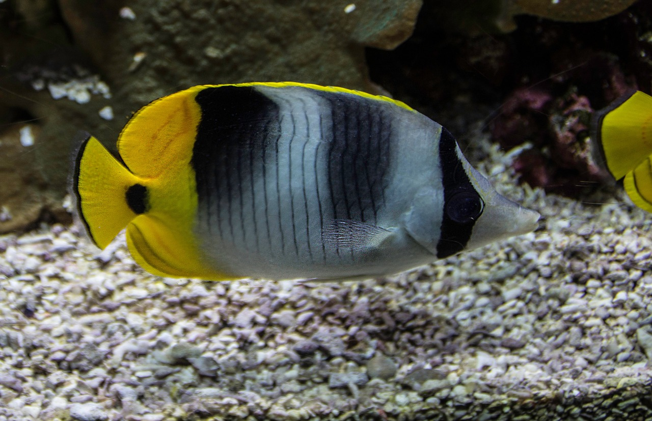 fish-982167_1280