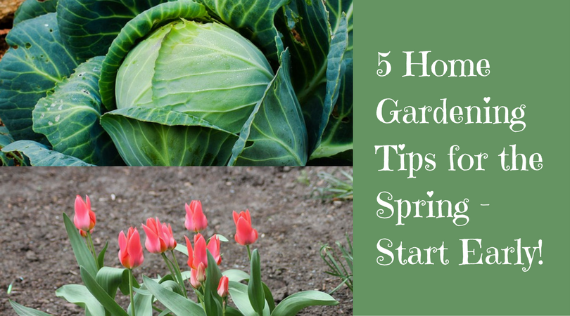 5 Home Gardening Tips for the Spring – Start Early!