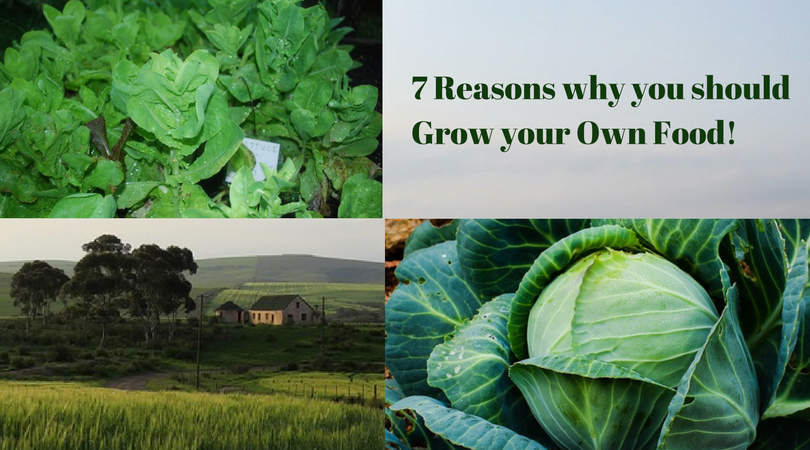 7 Reasons why you should Grow your Own Food