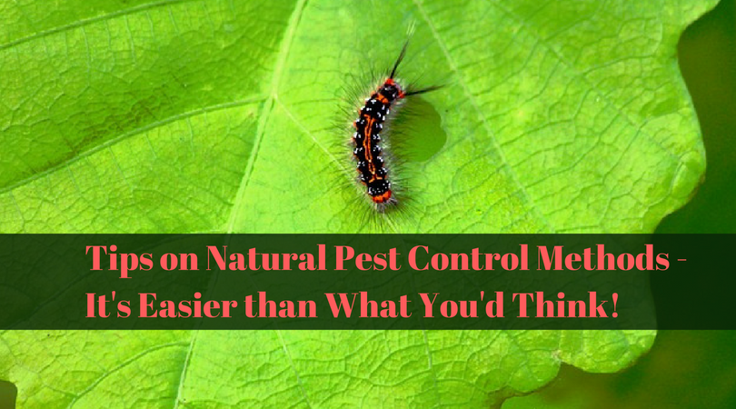 Tips on Natural Pest Control Methods – It's Easier than What You'd Think!