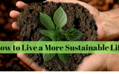 How to Live a More Sustainable Life